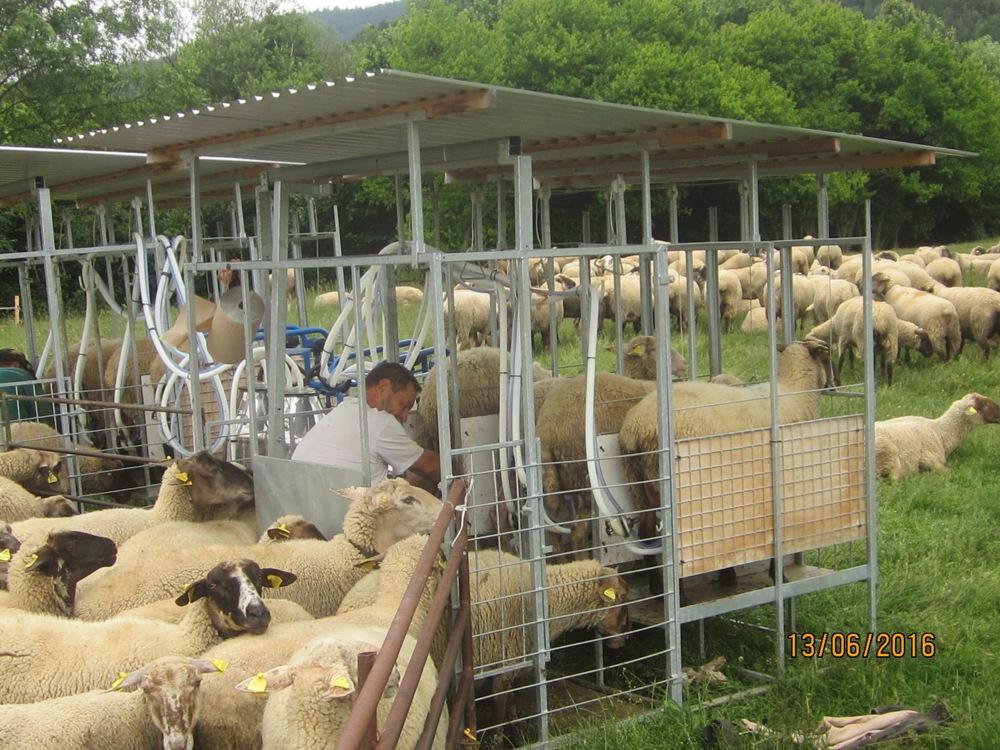 OBJEDNAJTE SI EŠTE PRED LETOM ZA ZVÝHODNENÚ CENU: Stojisko, strunga, dojáreň na ovce
